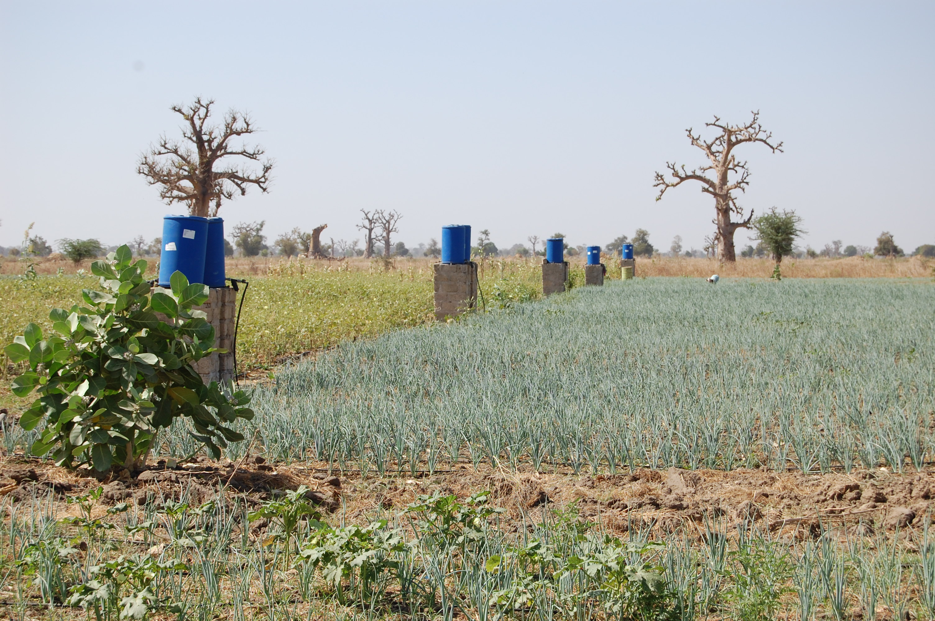 Can Drip Irrigation Break Africa S Hunger Cycles The